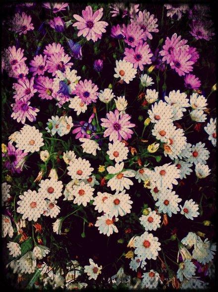 purple-texture-flowers.jpg