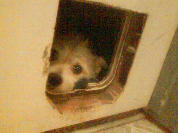 It would look like my friends dog Jojo hiding in his doggy door.