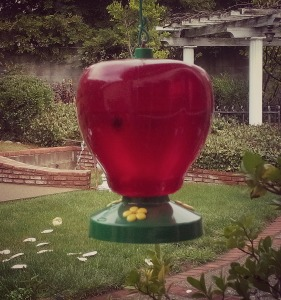 Hummingbird Feeder/photo: Shazza