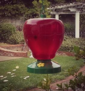 Hummingbird Feeder/photo: Shazza