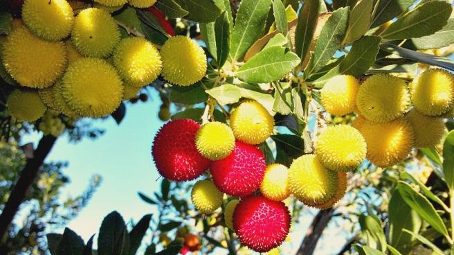 Yangmei Fruit or Myrica Rubra.